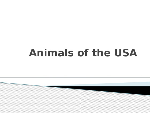 Animals of the USA