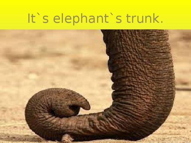 It`s elephant`s trunk.