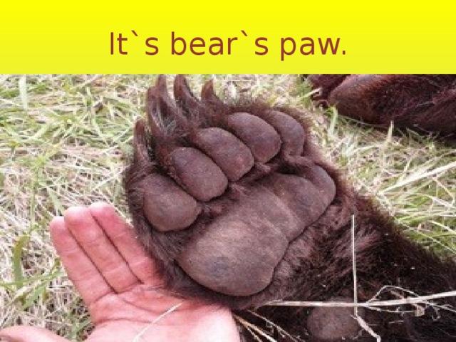 It`s bear`s paw.