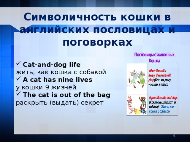 Символичность кошки в английских пословицах и поговорках Cat-and-dog life жить, как кошка с собакой A cat has nine lives у кошки 9 жизней The cat is out of the bag раскрыть (выдать) секрет