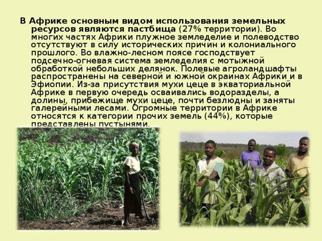 В Африке основным видом использования земельных ресурсов являются пастбища (27% территории). Во многих частях Африки плужное земледелие и полеводство отсутствуют в силу исторических причин и колониального прошлого. Во влажно-лесном поясе господствует подсечно-огневая система земледелия с мотыжной обработкой небольших делянок. Полевые агроландшафты распространены на северной и южной окраинах Африки и в Эфиопии. Из-за присутствия мухи цеце в экваториальной Африке в первую очередь осваивались водоразделы, а долины, прибежище мухи цеце, почти безлюдны и заняты галерейными лесами. Огромные территории в Африке относятся к категории прочих земель (44%), которые представлены пустынями.