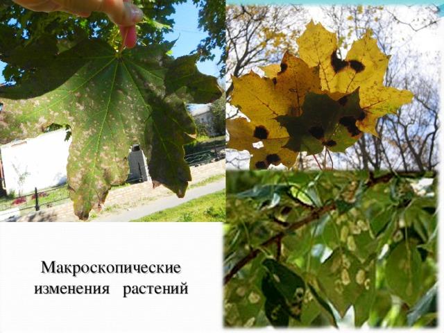 Макроскопические изменения растений
