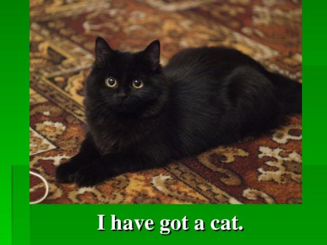 I have got a cat.