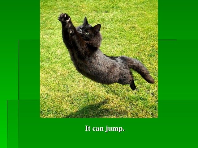 It can  jump.