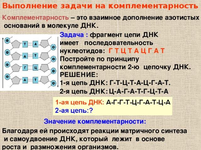 Выполнение задачи на комплементарность Комплементарность – это взаимное дополнение азотистых  оснований в молекуле ДНК. Задача :  фрагмент цепи ДНК имеет последовательность нуклеотидов: Г Т Ц Т А Ц Г А Т Постройте по принципу комплементарности 2-ю цепочку ДНК. РЕШЕНИЕ: 1-я цепь ДНК: Г-Т-Ц-Т-А-Ц-Г-А-Т. 2-я цепь ДНК: Ц-А-Г-А-Т-Г-Ц-Т-А Значение комплементарности: Благодаря ей происходят реакции матричного синтеза  и самоудвоение ДНК, который лежит в основе роста и размножения организмов.