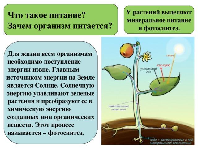 Что такое питание?  Зачем организм питается? У растений выделяют минеральное питание и фотосинтез. Для жизни всем организмам необходимо поступление энергии извне. Главным источником энергии на Земле является Солнце. Солнечную энергию улавливают зеленые растения и преобразуют ее в химическую энергию созданных ими органических веществ. Этот процесс называется – фотосинтез.