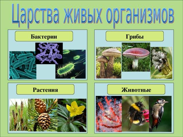 Картинки бактерий грибов растений и животных