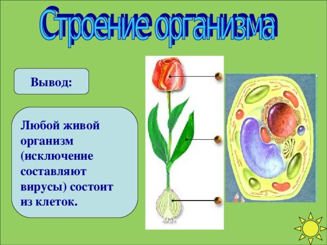 Вывод: Любой живой организм (исключение составляют вирусы) состоит из клеток.