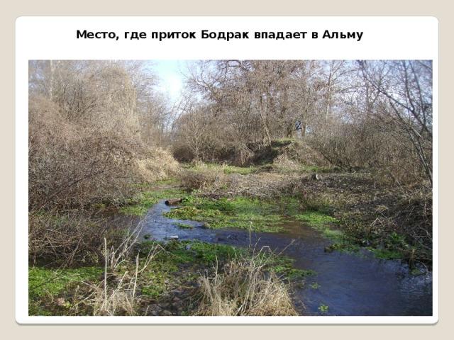 Место, где приток Бодрак впадает в Альму