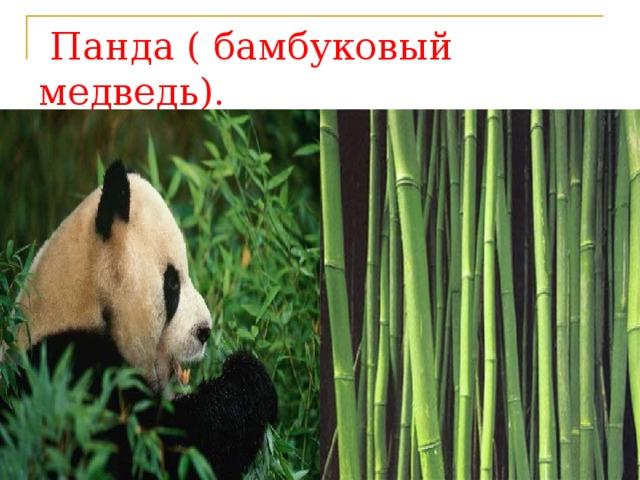 Панда ( бамбуковый медведь).