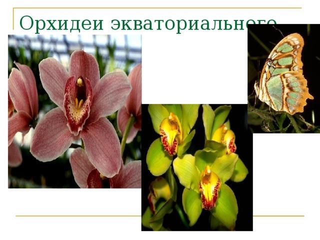 Орхидеи экваториального леса