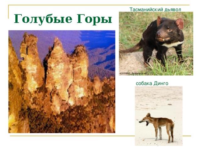 Тасманийский дьявол Голубые Горы  собака Динго