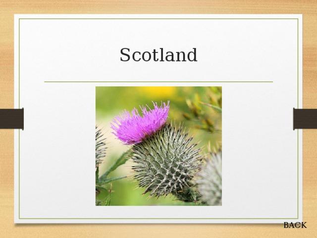 Scotland BACK