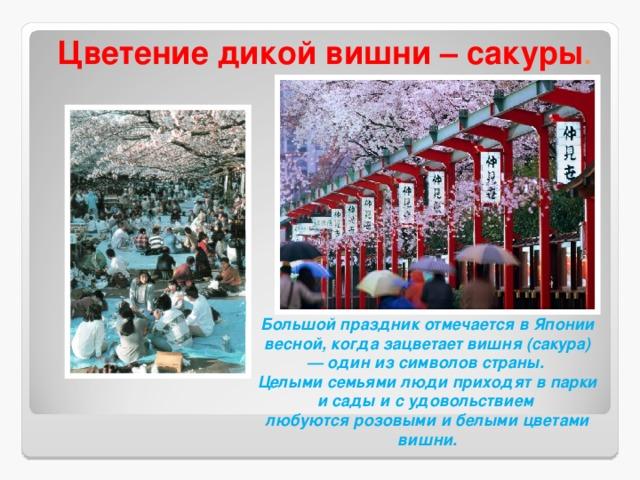 Цветение дикой вишни – сакуры . Большой праздник отмечается в Японии весной, когда зацветает вишня (сакура) — один из символов страны. Целыми семьями люди приходят в парки и сады и с удовольствием любуются розовыми и белыми цветами вишни.