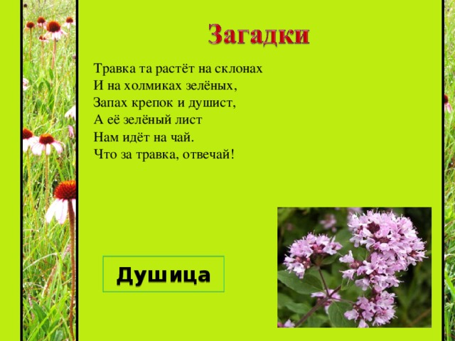 Каждый, думаю, узнает,  Если в поле побывает,  Этот синенький цветок,  Всем известный ... Василёк