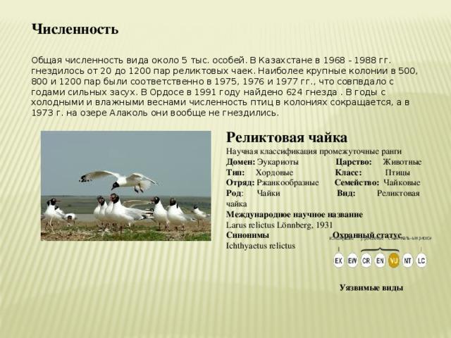 Численность  Общая численность вида около 5 тыс. особей. В Казахстане в 1968 - 1988 гг. гнездилось от 20 до 1200 пар реликтовых чаек. Наиболее крупные колонии в 500, 800 и 1200 пар были соответственно в 1975, 1976 и 1977 гг., что совпвдало с годами сильных засух. В Ордосе в 1991 году найдено 624 гнезда . В годы с холодными и влажными веснами численность птиц в колониях сокращается, а в 1973 г. на озере Алаколь они вообще не гнездились. Реликтовая чайка Научная классификация промежуточные ранги Домен: Эукариоты Царство: Животные Тип: Хордовые Класс: Птицы Отряд: Ржанкообразные Семейство: Чайковые Род : Чайки Вид: Реликтовая чайка Международное научное название Larus relictus Lönnberg, 1931 Синонимы Охранный статус Ichthyaetus relictus     Уязвимые виды