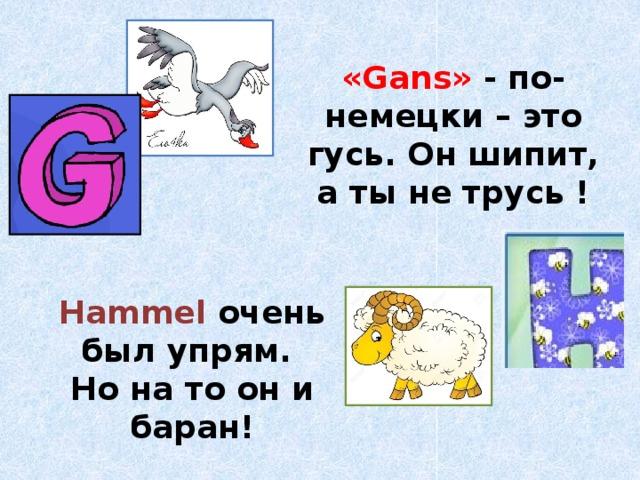 «Gans» - по-немецки – это гусь. Он шипит, а ты не трусь ! Hammel  очень был упрям. Но на то он и баран!