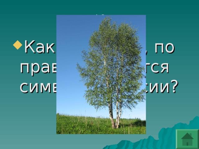 Какое дерево, по праву, считается символом России?