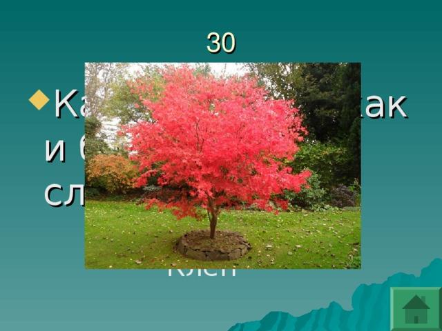 Какое дерево, как и береза, дает сладкий сок?