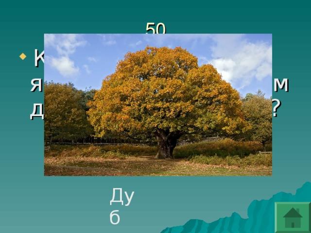 Какое дерево являлось священным для наших предков?
