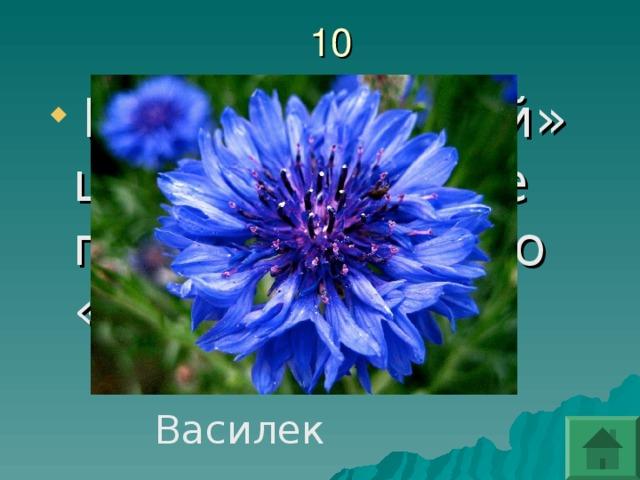 Какой «царский» цветок римляне прозвали просто «синенький» ?