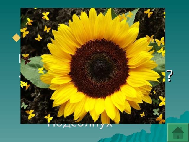 Какой цветокв народе называют «цветком солнца»?