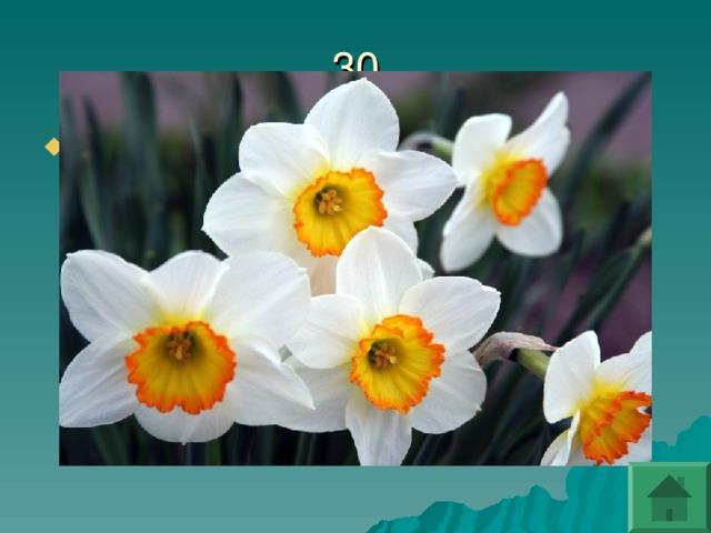 Какой цветок является символом самовлюбленности?