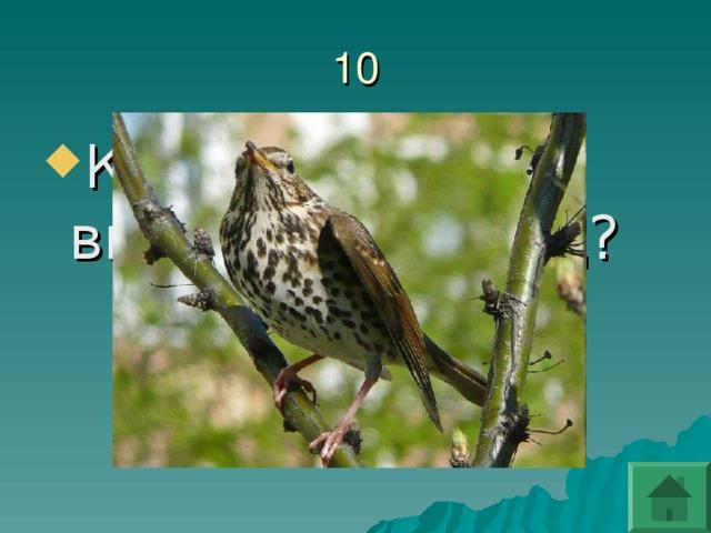 Какая птица не высиживает яиц?