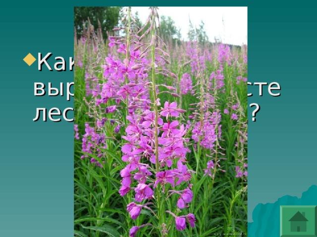 Какой цветок вырастает на месте лесных пожарищ?