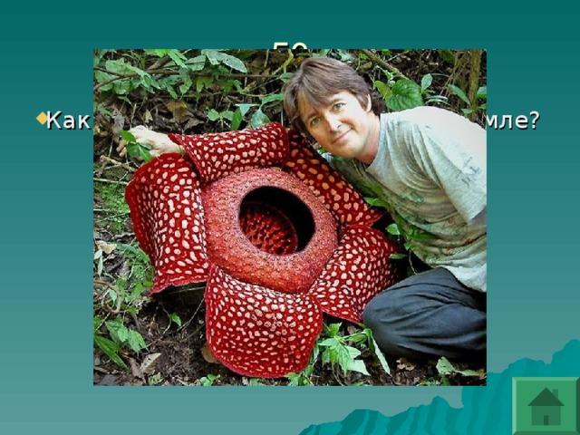 Какие цветы самые большие на земле?