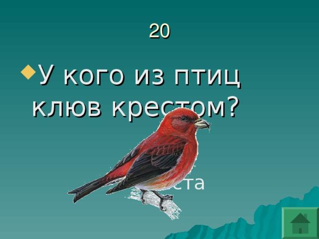 У кого из птиц клюв крестом?