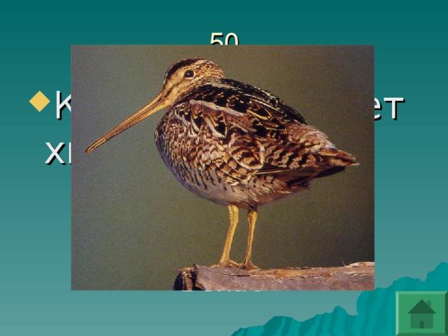 Какая птица поет хвостом?