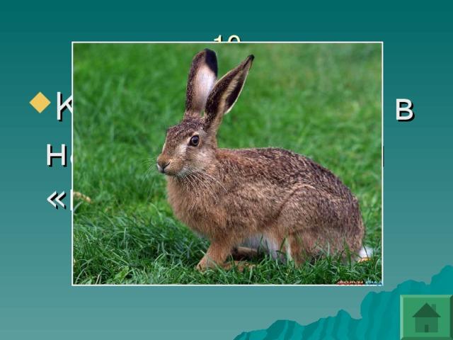 Какое животное в народе прозвали «косым»?