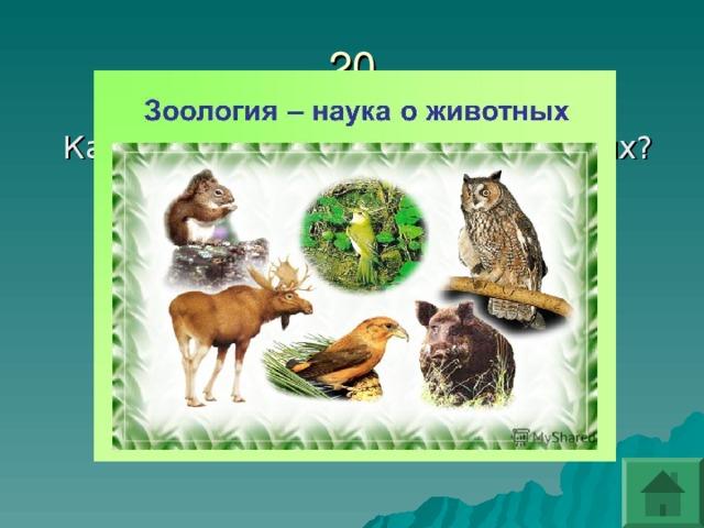 Как называется наука о животных? Как называется наука о животных? Зоология