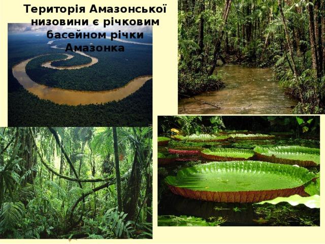 Територія Амазонської низовини є річковим басейном річки Амазонка