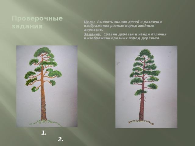 Проверочные задания Цель: Выявить знания детей о различии изображения разных пород хвойных деревьев. Задание: Сравни деревья и найди отличия в изображении разных пород деревьев. 1. 2.