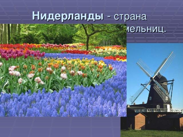Нидерланды - страна тюльпанов и ветряных мельниц.