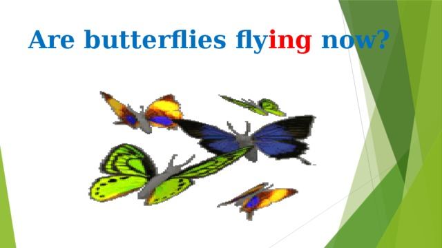 Are butterflies fly ing now?