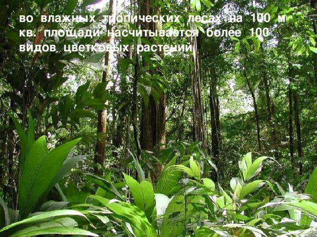 во влажных тропических лесах на 100 м кв. площади насчитывается более 100 видов цветковых растений