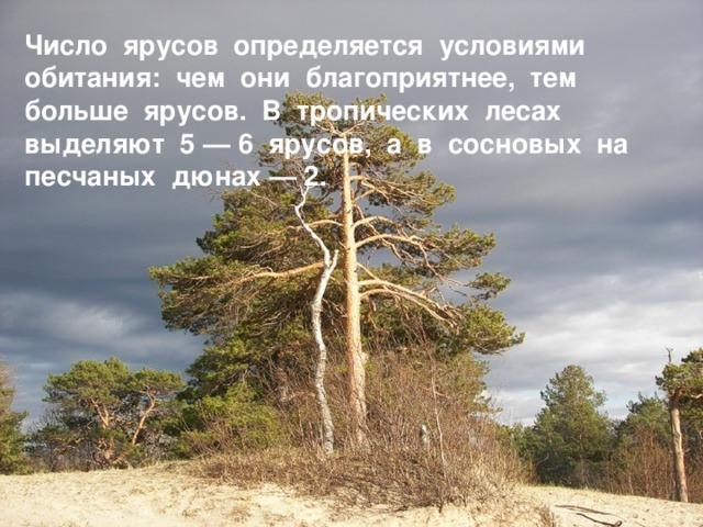 Число ярусов определяется условиями обитания: чем они благоприятнее, тем больше ярусов. В тропических лесах выделяют 5 — 6 ярусов, а в сосновых на песчаных дюнах — 2.