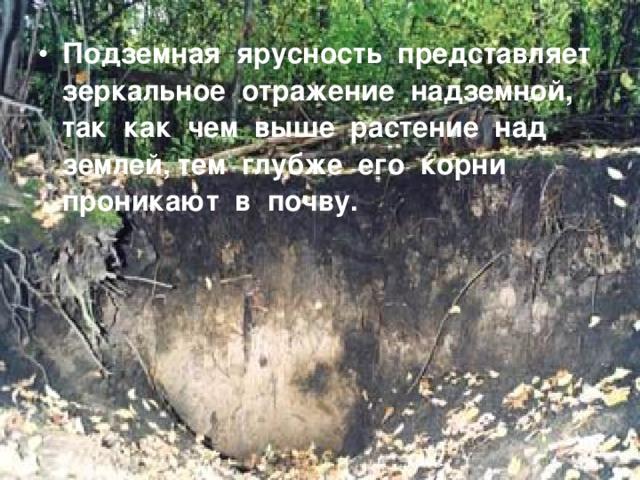 Подземная ярусность представляет зеркальное отражение надземной, так как чем выше растение над землей, тем глубже его корни проникают в почву.
