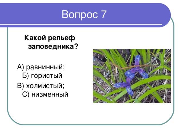 Какой рельеф заповедника ?   А) равнинный; Б) гористый  В) холмистый; С) низменный