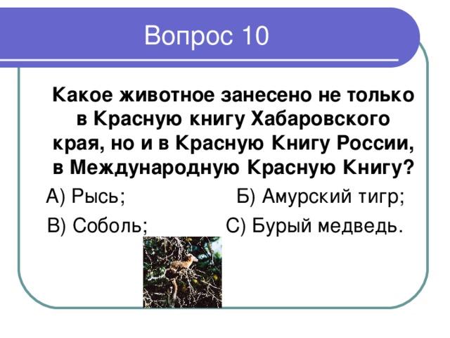 Какое животное занесено не только в Красную книгу Хабаровского края, но и в Красную Книгу России, в Международную Красную Книгу ? А ) Рысь; Б) Амурский тигр; В) Соболь; С) Бурый медведь.