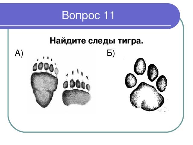 Найдите следы тигра.