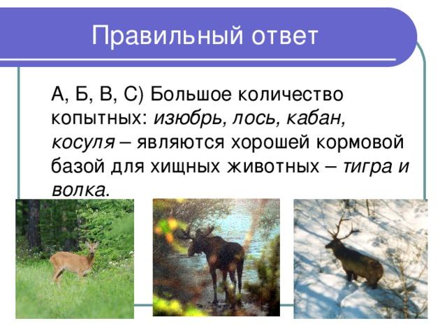 изюбрь, лось, кабан, косуля тигра и волка
