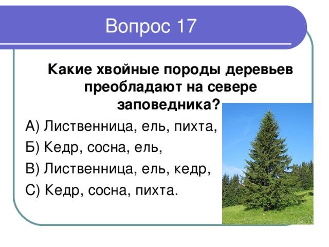 Какие хвойные породы деревьев преобладают на севере заповедника ?  А) Лиственница,ель,пихта, Б) Кедр, сосна, ель, В) Лиственница,ель, кедр, С) Кедр, сосна, пихта.