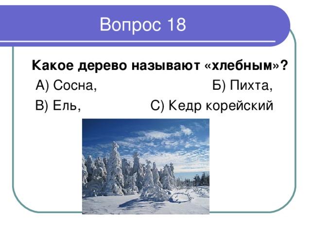 Какое дерево называют «хлебным» ? А) Сосна, Б) Пихта, В) Ель, С) Кедр корейский