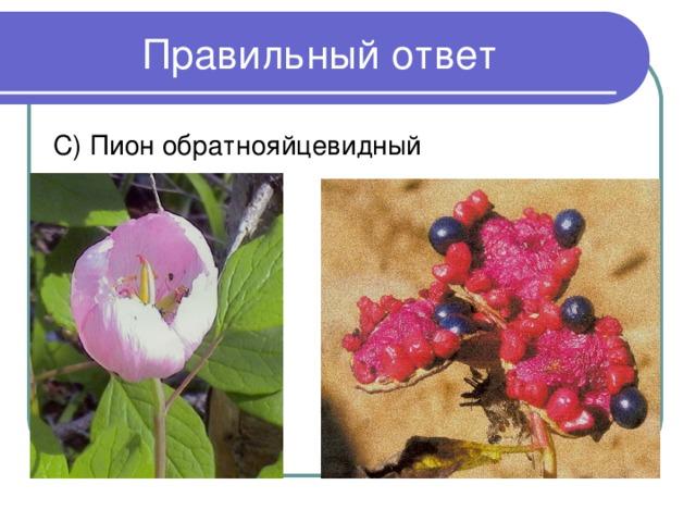 С) Пион обратнояйцевидный