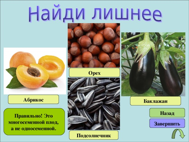 Орех Абрикос Баклажан Правильно! Это многосеменной плод, а не односеменной. Назад Завершить Подсолнечник