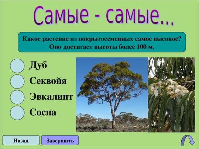 Какое растение из покрытосеменных самое высокое? Оно достигает высоты более 100 м. Дуб Секвойя Эвкалипт Сосна Назад Завершить